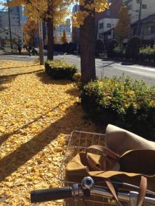 名古屋 銀杏並木